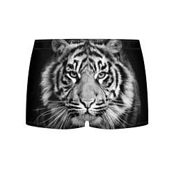 Трусы-боксеры мужские Красавец тигр цвета 3D — фото 1